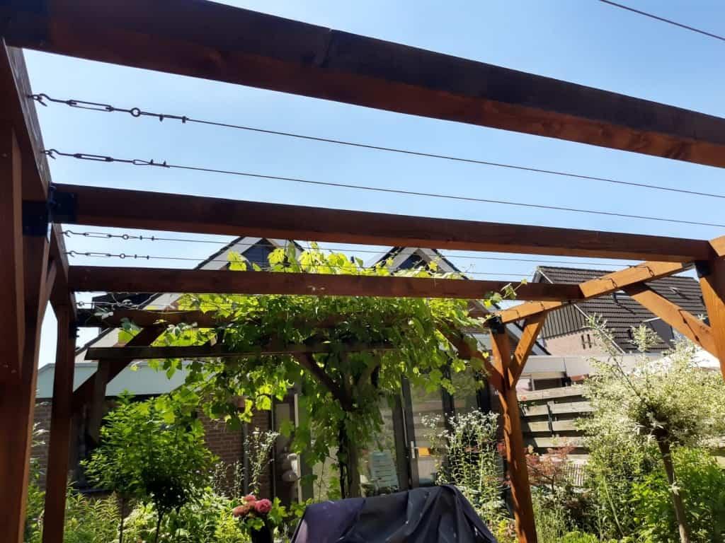 Druiven geleiden over een pergola in combinatie met rvs staalkabel en draadspanners.