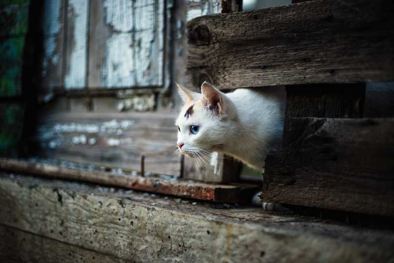 katten binnen en buiten de schutting